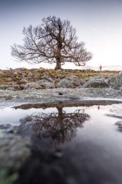 Hutebuche die sich im Wasser spiegelt