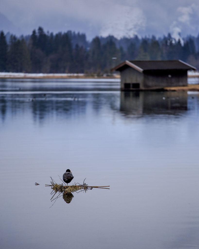 Vogel, See, Hütte