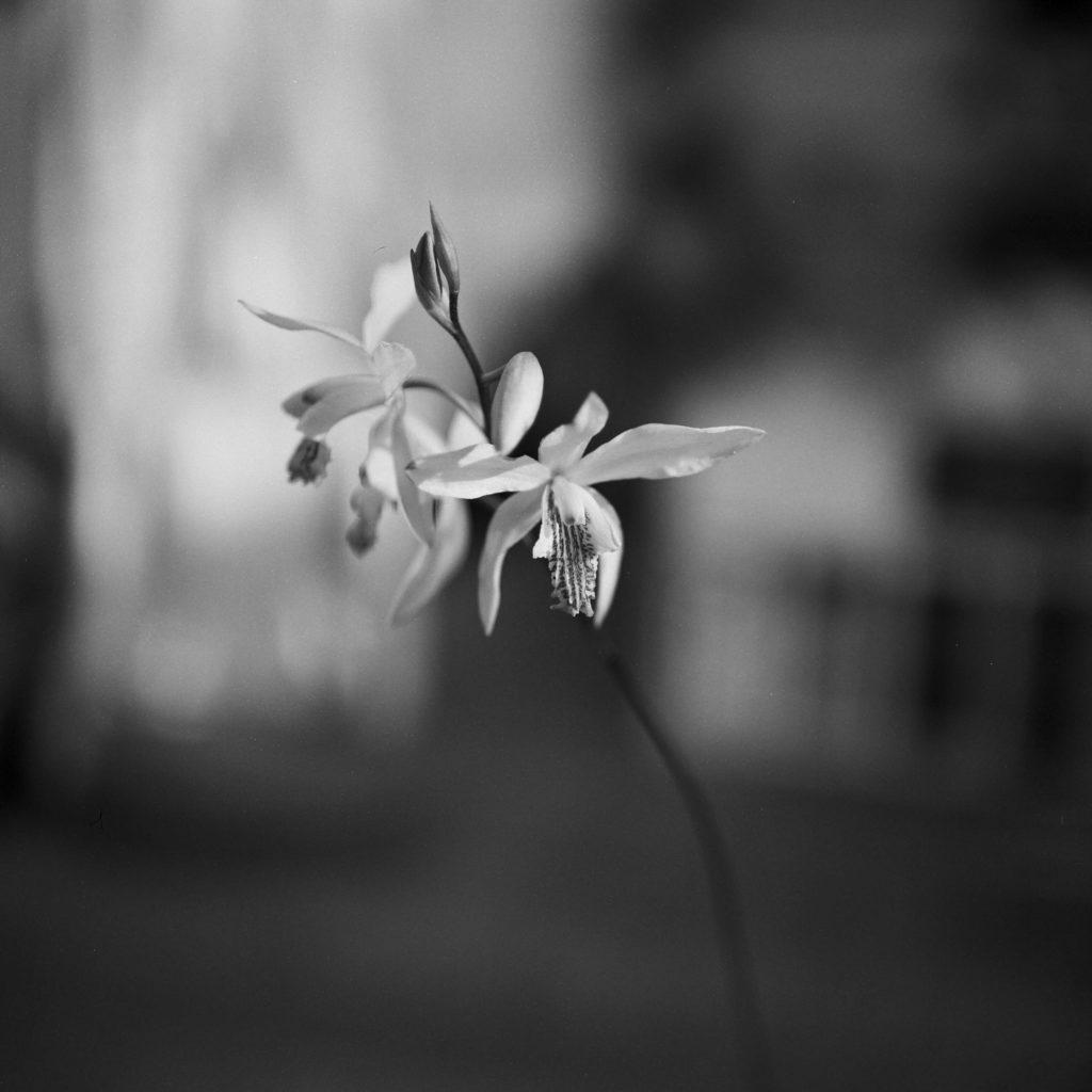 Aufnahme Orchidee