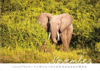 Wild Uganda Kalenderblatt November